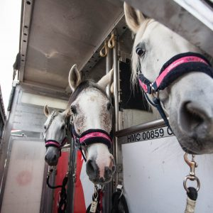 Our Odysseo Horses have arrived