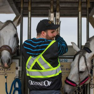 Odysseo Horses Arrive in Vancouver for our Jan 29 premiere