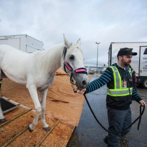 Odysseo Horses Arrive in Vancouver
