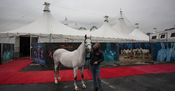 Odysseo Horse Arrival in Vancouver - Pearl & Adrien