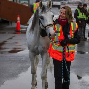 Odysseo Horses in Vancouver