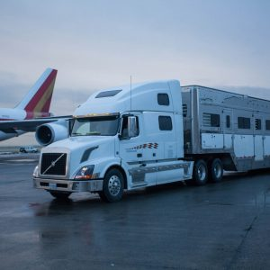Transporting our 65 Odysseo Horses