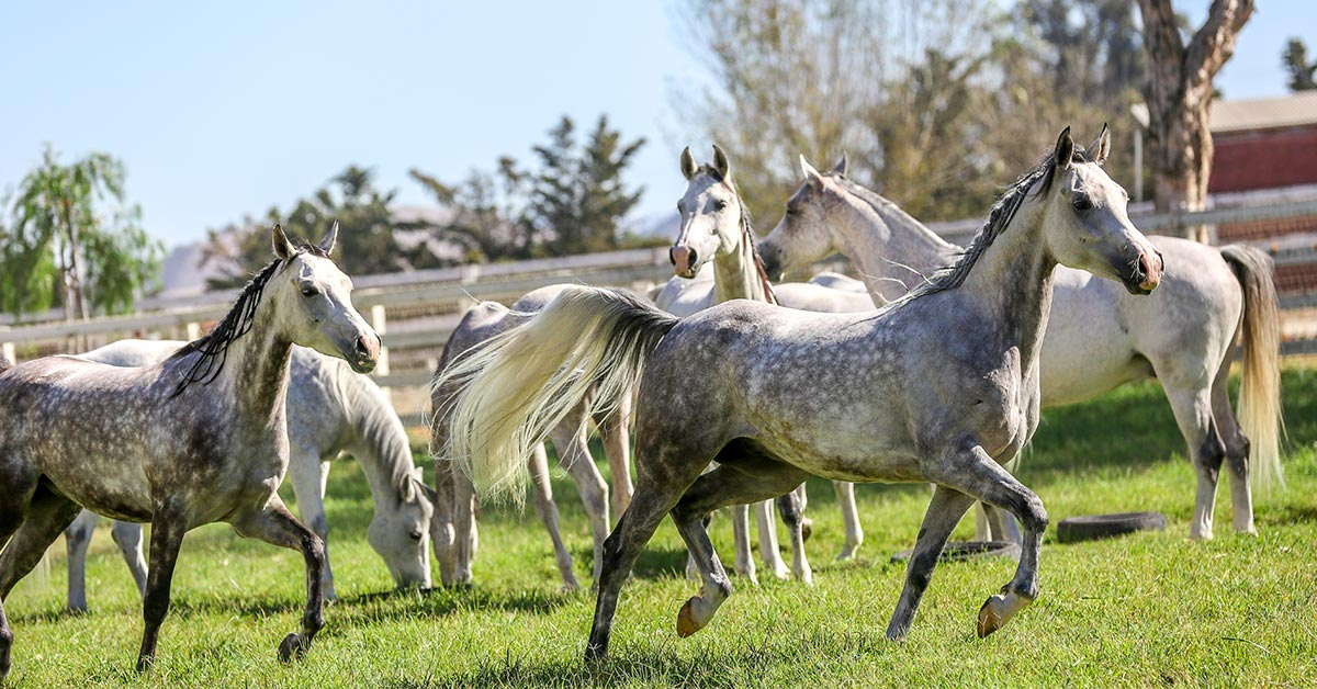 Odysseo Ventura County • A 12-day Retreat for our 65 Horses on a Local Farm