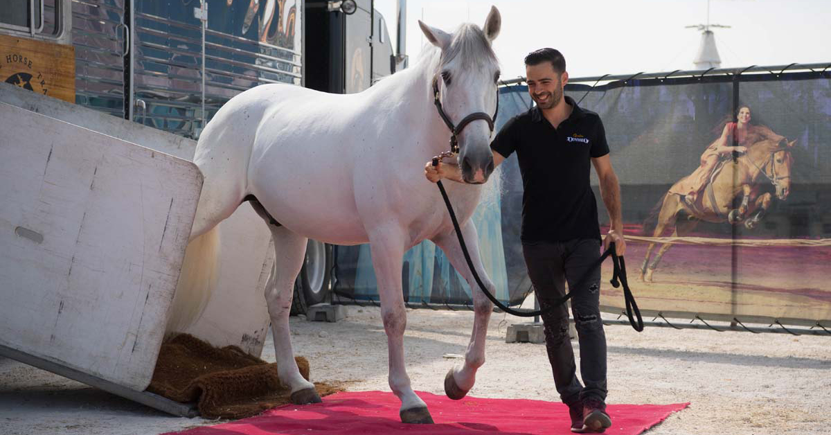 Cavalia Odysseo • Our horses have arrived at the White Big Top in Winnipeg!